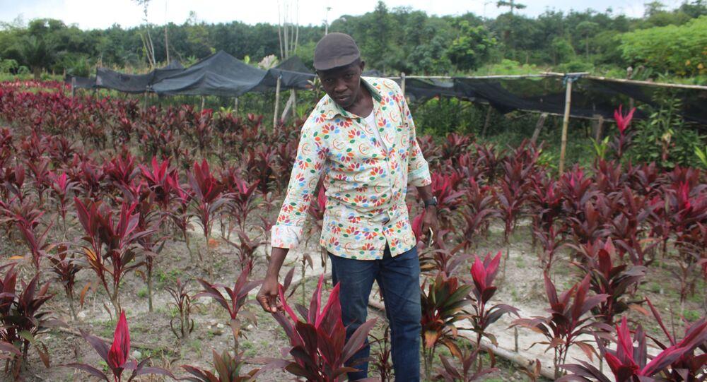 Amidou Zongo au milieu d'un champ de Cordylines rouges