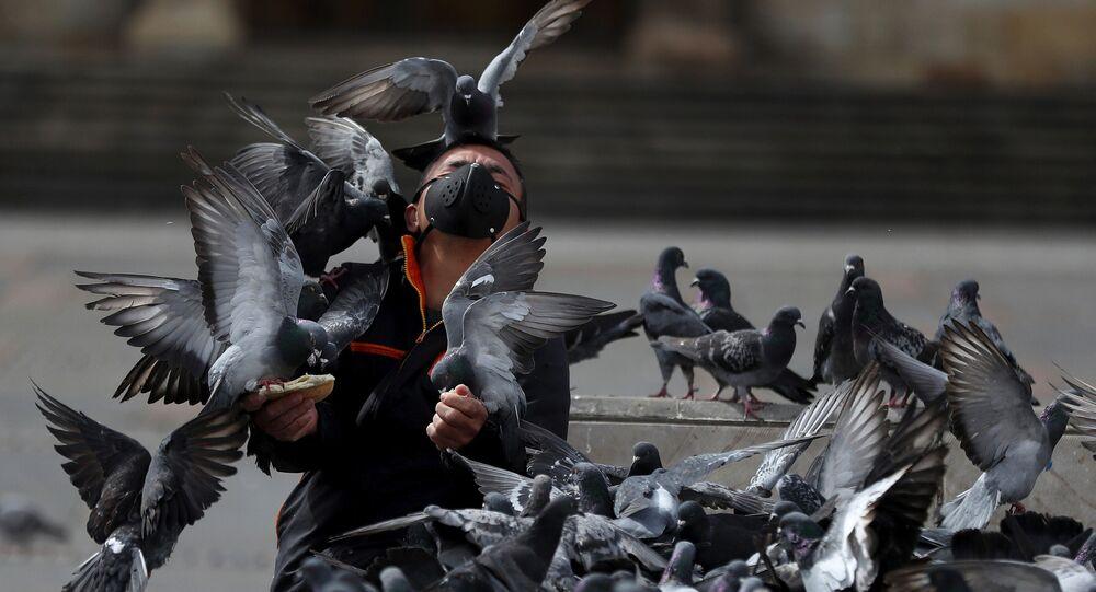 Un homme nourrit des pigeons