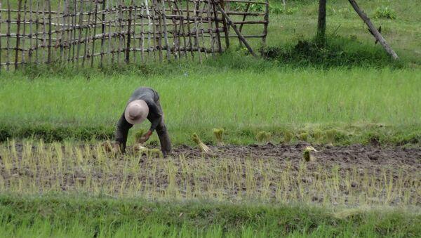 Travailleur agricole (image d'illustration) - Sputnik France