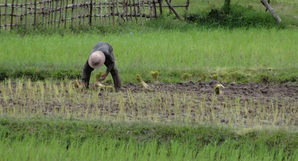 Travailleur agricole (image d'illustration)