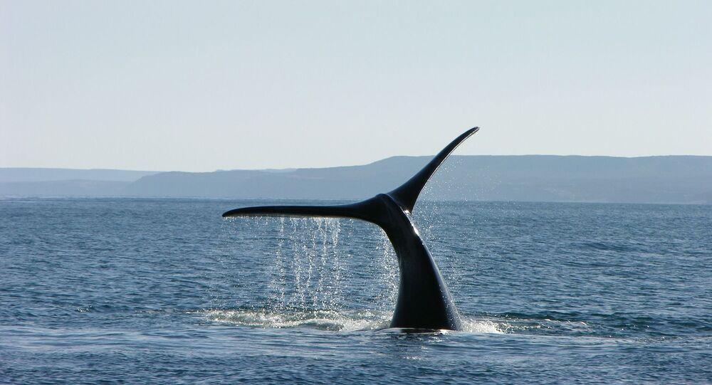 Une queue de baleine, image d'illustration