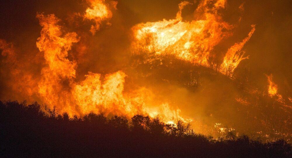 Incendie de forêt. Image d'illustration