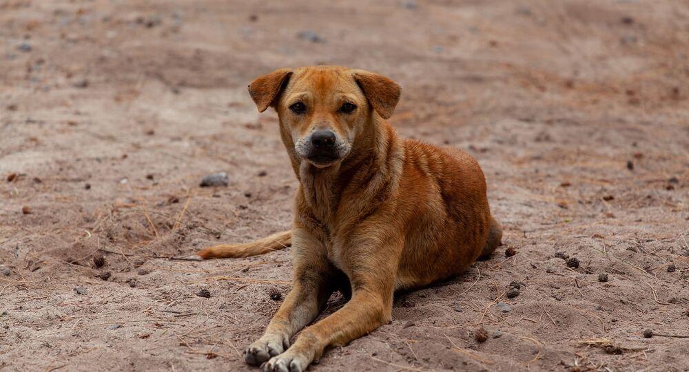 Un chien errant (image d'illustration)