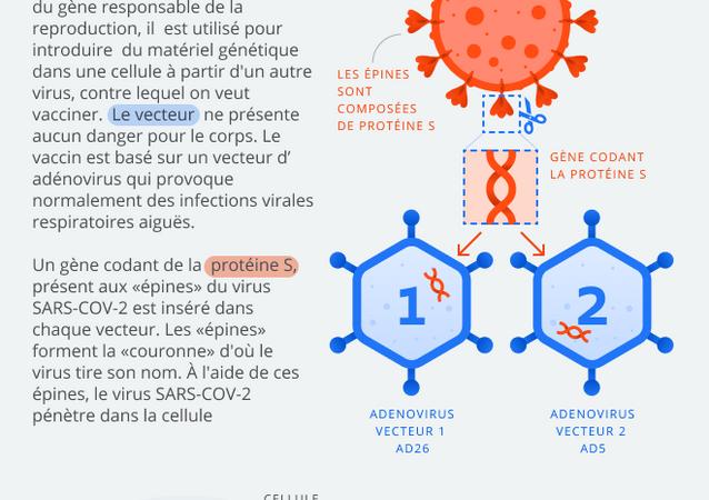 Vaccin à deux vecteurs contre le coronavirus