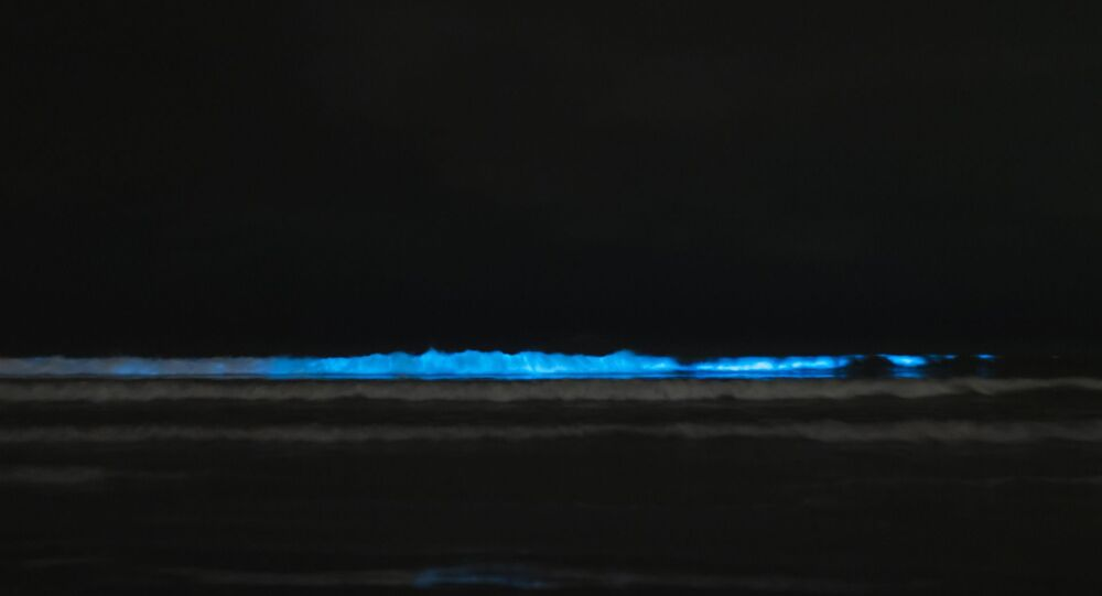 Bioluminescence, photo d'illustration