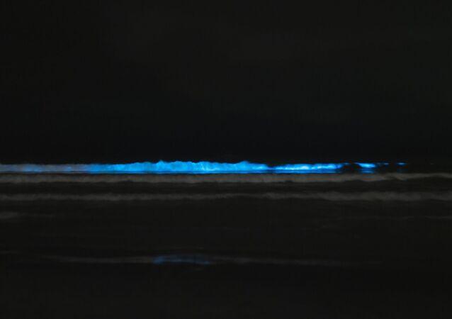 Bioluminescence, photo d'illustration