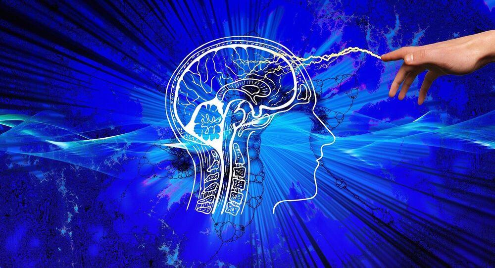 Le cerveau humain (image d'illustration)