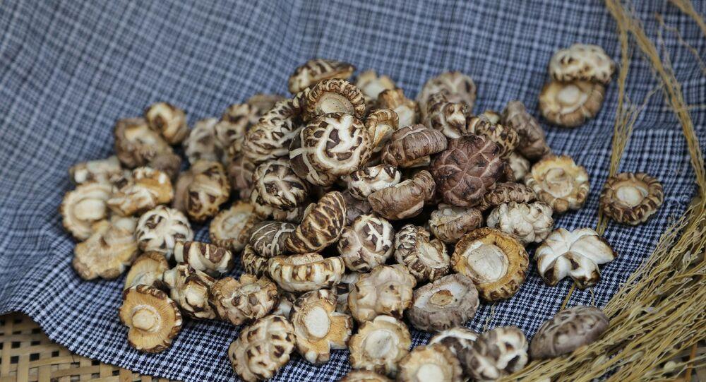 Champignons shiitaké