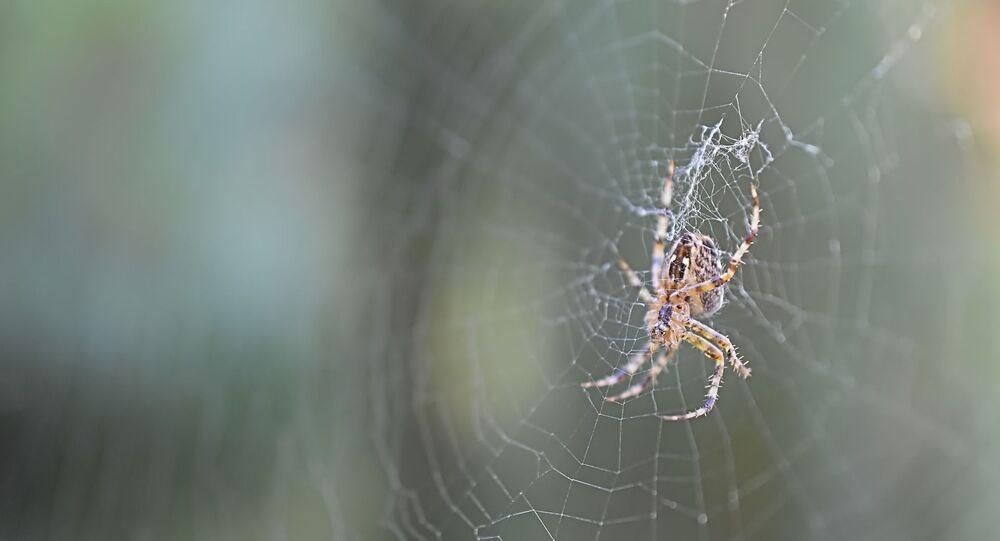 Une araignée (image d'illustration)