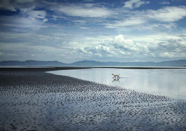 Plage de l'île de Mindanao, aux Philippines
