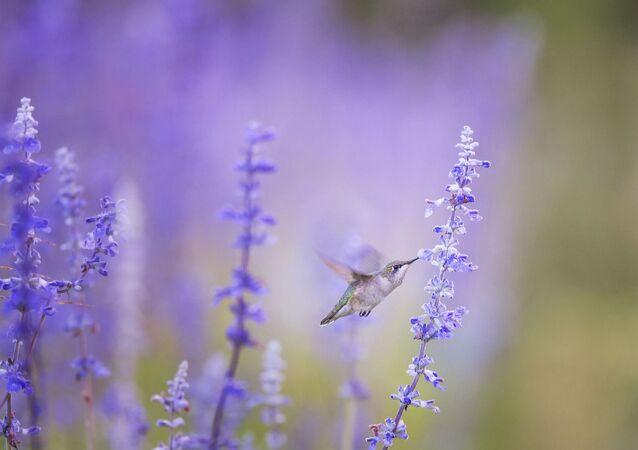 Un colibri (image d'illustration)