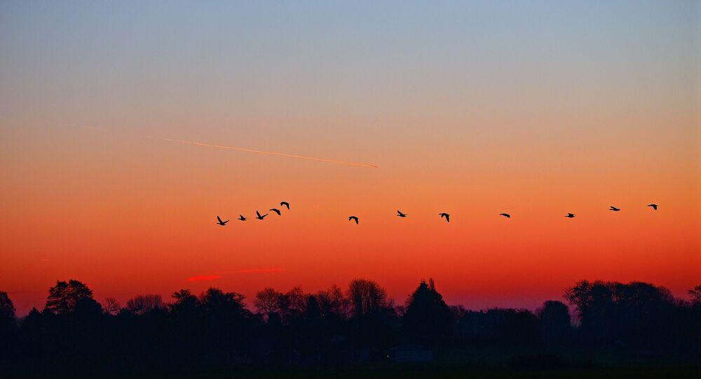 Oiseaux, coucher du soleil