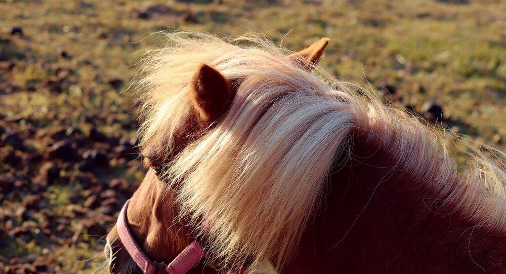 Un poney