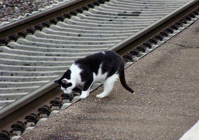 Un chat à la gare