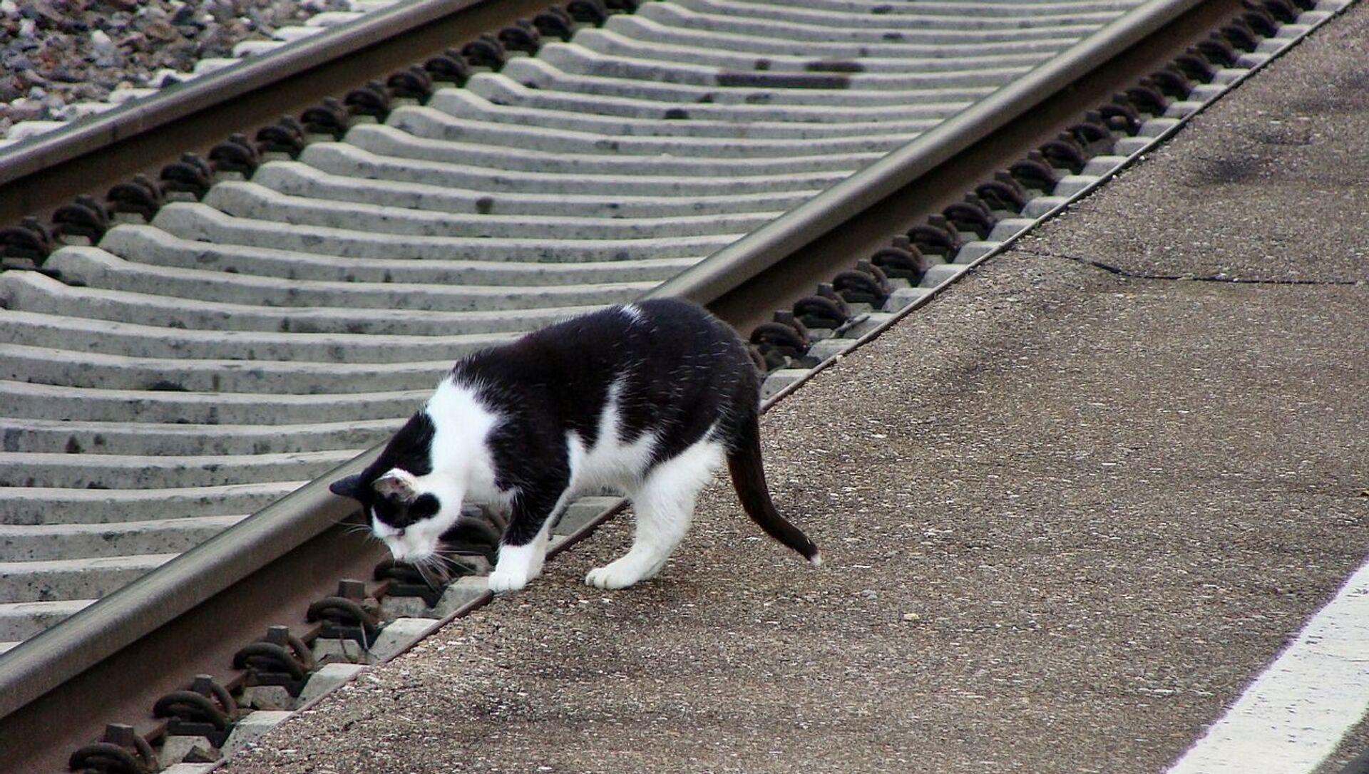 Un chat à la gare - Sputnik France, 1920, 04.03.2021