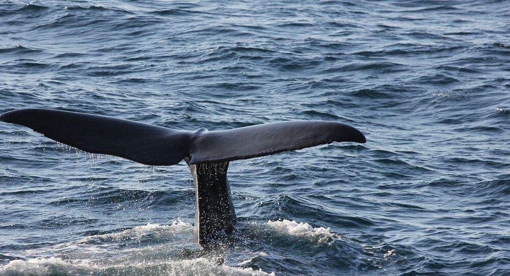 Baleine, image d'illustration