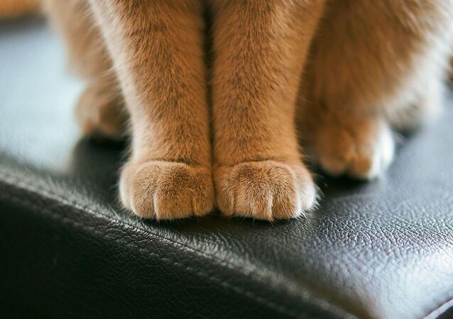 Des pattes