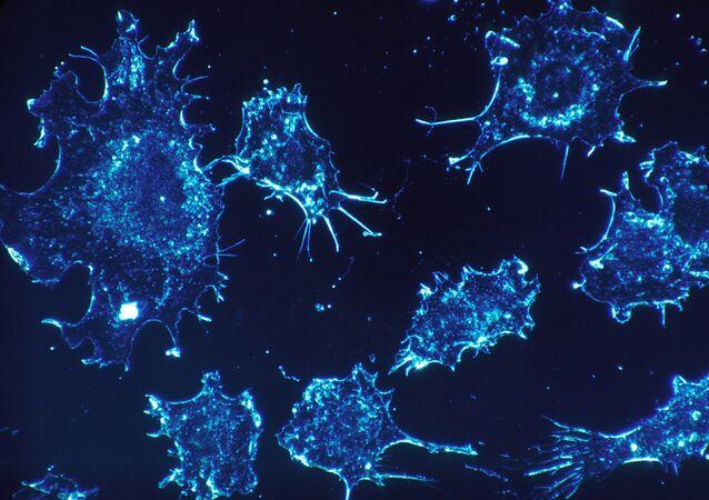 Des cellules cancéreuses (image d'illustration)