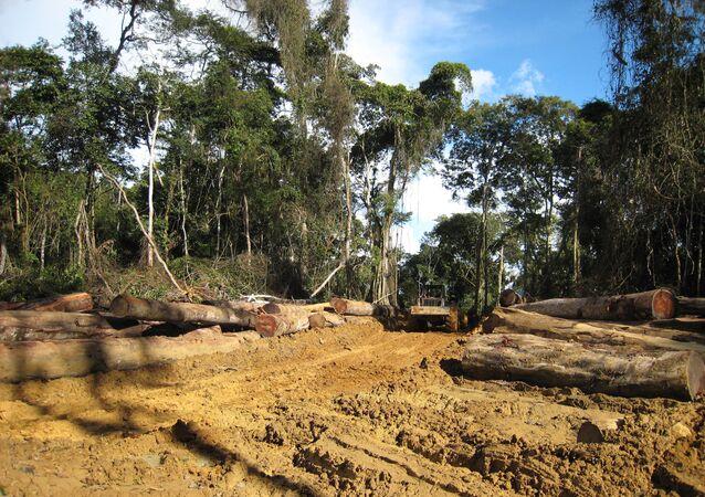 La forêt camerounaise