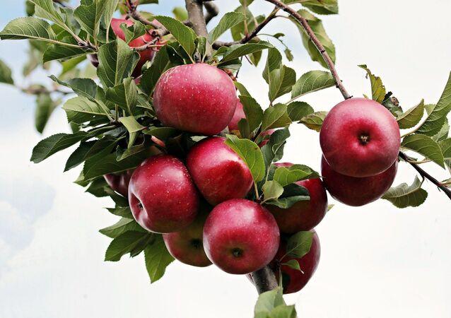 Des pommes (image d'illustration)