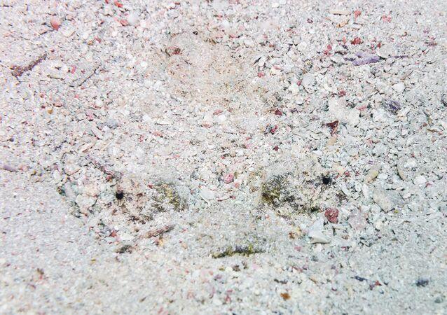 Un poisson-pierre