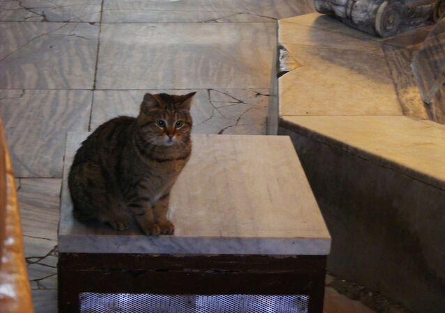Gli, chat de Sainte-Sophie d'Istanbul (archive photo)