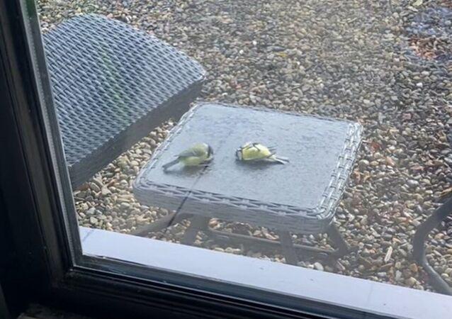 Un oiseau «ressuscité» par son amie