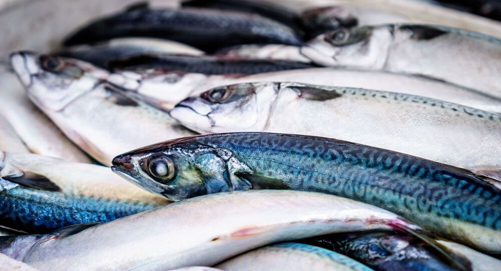 Des poissons (image d'illustration)