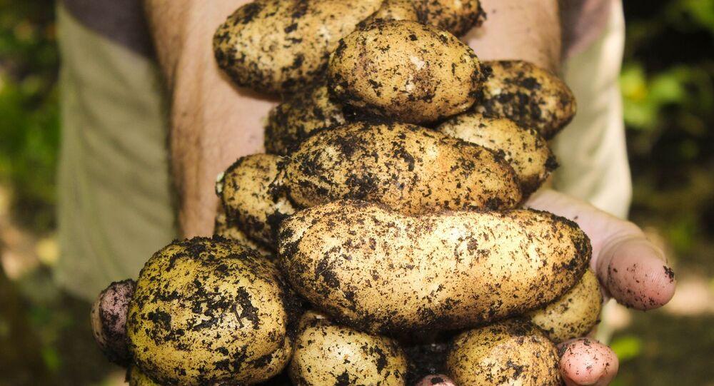 Des pommes de terre