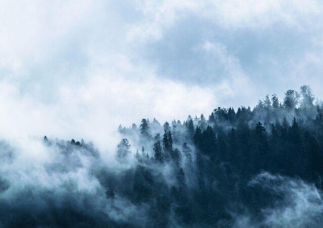 Forêt en brouillard