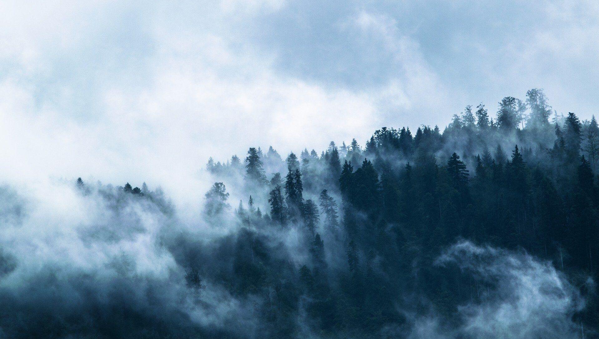 Forêt en brouillard - Sputnik France, 1920, 29.07.2021