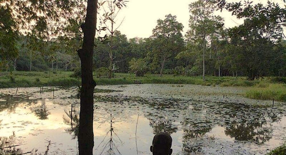 Une vue sur le parc du Banco, à Abidjan.