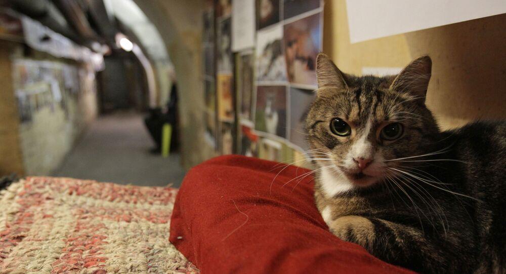 Un chat de l'Ermitage