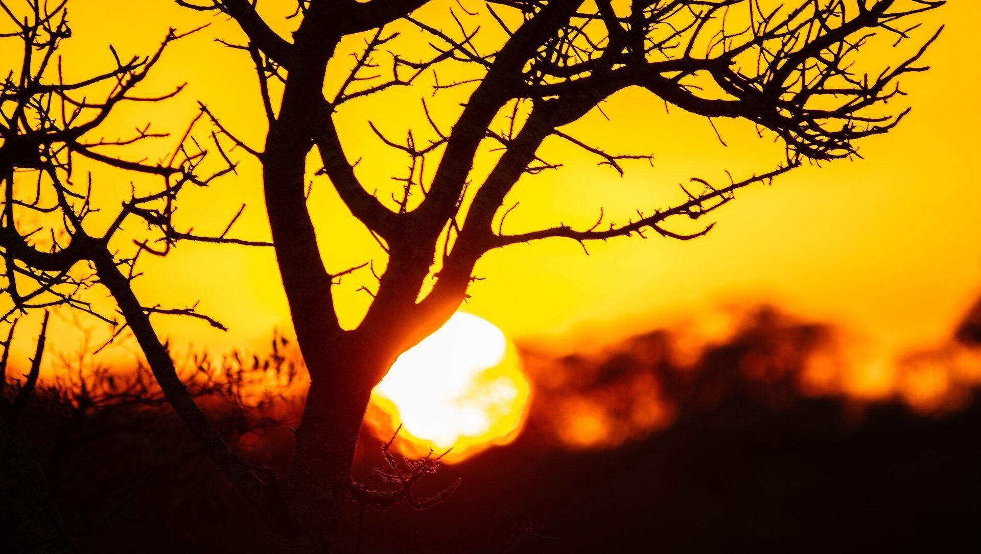 Coucher de soleil dans le parc national Kruger, Afrique du Sud - Sputnik France, 1920, 10.09.2021