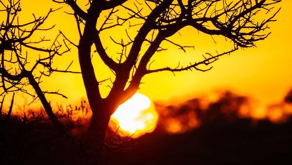 Coucher de soleil dans le parc national Kruger, Afrique du Sud - Sputnik France