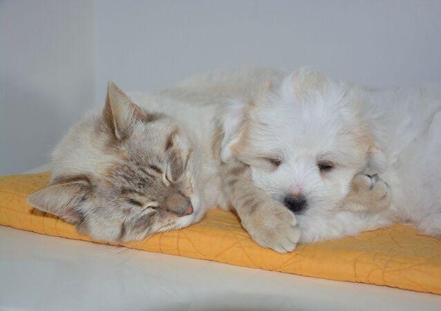 Un chien et un chat (image d'illustration)