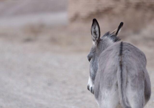 Un âne de dos