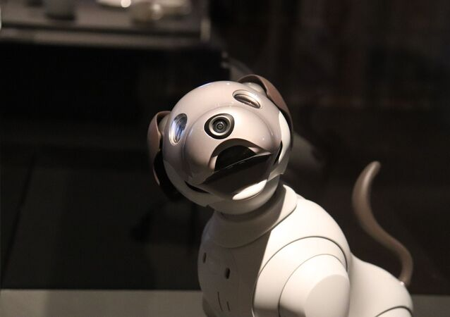 Un chien robot (image d'illustration)