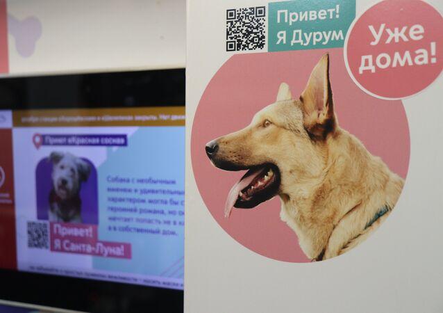 Le projet «Queues et Pattes» dans le métro de Moscou