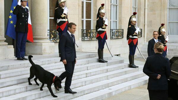 Le «premier chien des États-Unis» et autres animaux de compagnie des dirigeants internationaux   - Sputnik France