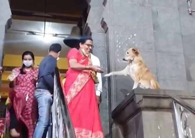 Un chien indien «bénit» le peuple avec sa patte
