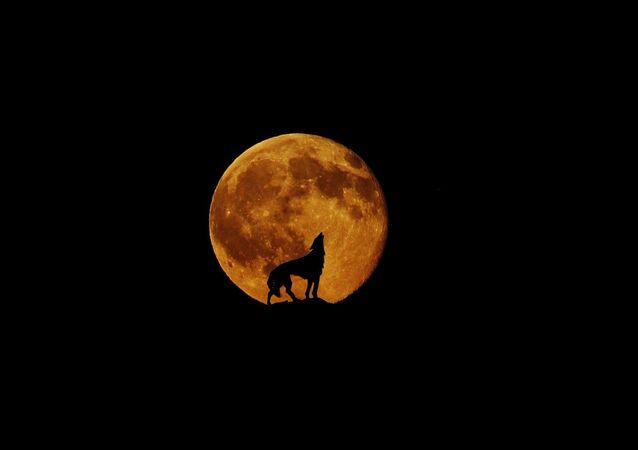 La Lune du loup
