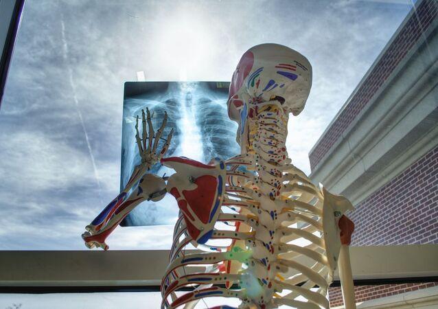 squelette vertèbres