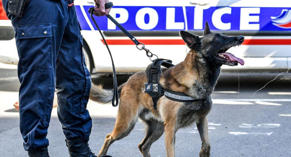Un chien des policiers, image d'illustration