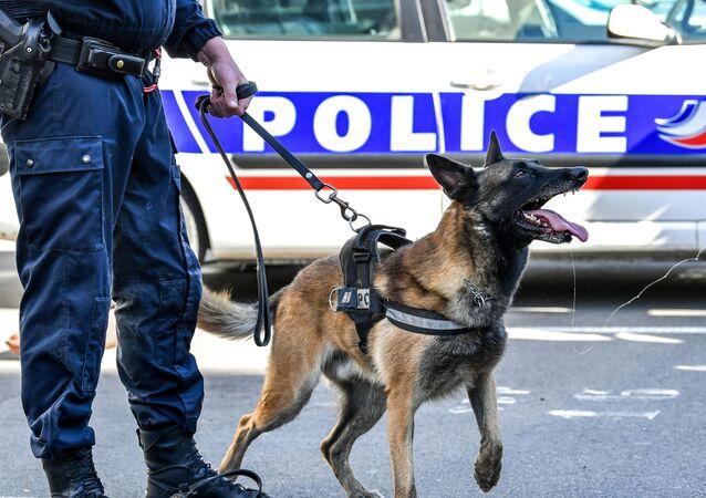 Un chien des policiers