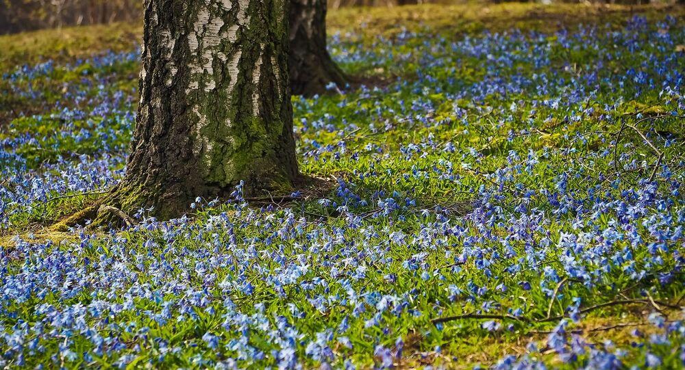 Des fleurs et un arbre