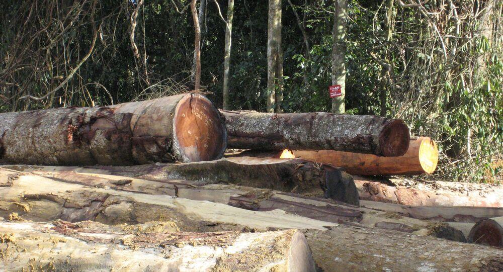 Déforestation au Cameroun
