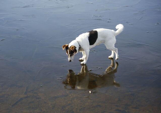 Un chien sur la glace