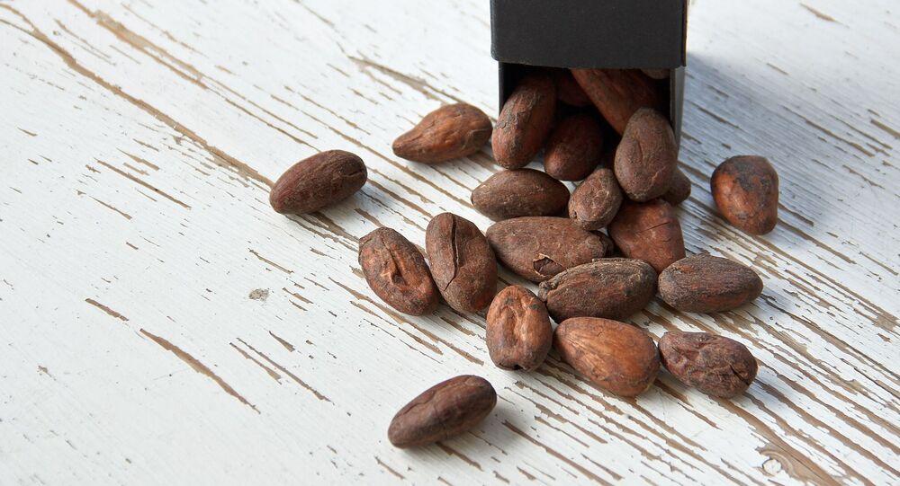 Des fèves de cacao (image d'illustration)