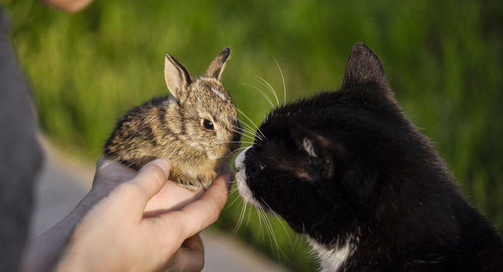 Un chat et un lapin (image d'illustration)